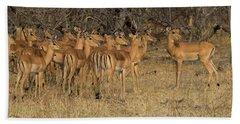 Herd Of Impalas Aepyceros Melampus Hand Towel