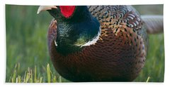 Ring-necked Pheasant Hand Towel by Doug Herr