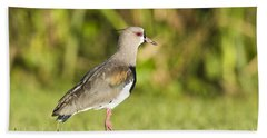 Southern Lapwing Hand Towel
