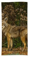 The Coyote Hand Towel