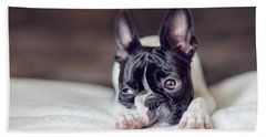 Boston Terrier Puppy Hand Towel by Nailia Schwarz