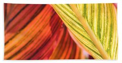 Canna Lily Named Durban Bath Towel by J McCombie