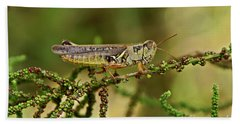 Hand Towel featuring the photograph Grasshopper by Olga Hamilton