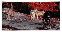 Timber Wolves Under A Red Maple Tree - Pano Hand Towel