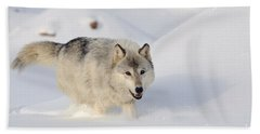 Wolf In Winter Hand Towel