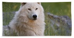 Arctic Wolf Hand Towel by Wolves Only