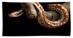 Blood Python Python Brongersmai Hand Towel by David Kenny