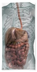 The Digestive System Hand Towel