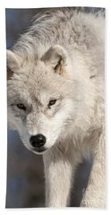 Arctic Wolf Pup Hand Towel by Wolves Only
