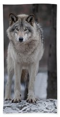 Timber Wolf  Hand Towel by Wolves Only