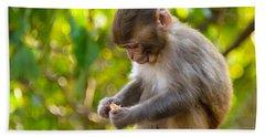 A Baby Macaque Eating An Orange Bath Towel