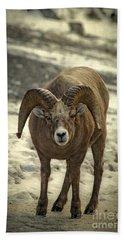 Rocky Mountain Bighorn Sheep Bath Towels