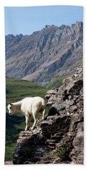 A Kid Mountain Goat In Glacier National Hand Towel