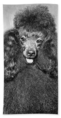 A Poodle And His Hairdo Hand Towel