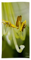 A Single Flower In Full Bloom Hand Towel by Carol F Austin