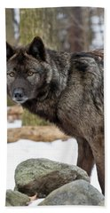 Hand Towel featuring the photograph A Wolf's Intense Focus by Gary Slawsky