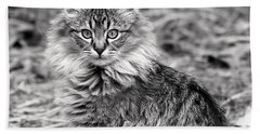 A Young Maine Coon Bath Towel