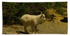 A Young Mountain Goat Hand Towel