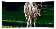 Addax Bath Towel