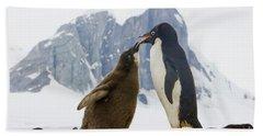 Adelie Penguin Chick Begging For Food Bath Towel