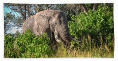 African Bush Elephant Bath Towel