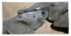 African Elephant Calves Playing  Hand Towel