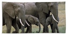 African Elephant Females And Calves Hand Towel