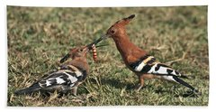 Bath Towel featuring the photograph African Hoopoe Feeding Young by Liz Leyden