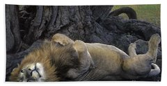 African Lion Panthera Leo Wild Kenya Hand Towel by Dave Welling