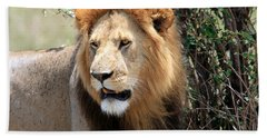 African Male Lion Hand Towel