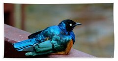 African Superb Starling Bird Rests On Wooden Beam Hand Towel