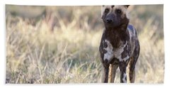 African Wild Dog  Lycaon Pictus Bath Towel