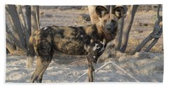 African Wild Dog Lycaon Pictus Standing Hand Towel