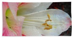 Amaryllis Kissed With Dew Bath Towel