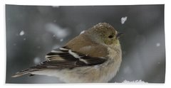 American Goldfinch In Winter Hand Towel by Kenneth Cole