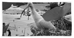 American White Ibis Black And White Hand Towel