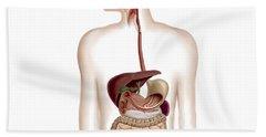 Anatomy Of Human Digestive System Hand Towel