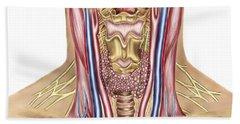 Anatomy Of Human Neck Hand Towel
