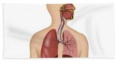 Anatomy Of Human Respiratory System Hand Towel