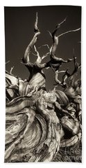 Ancient Bristlecone Pine In Black And White Hand Towel