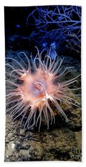 Hand Towel featuring the photograph Anemone Sea Life Sea Ocean Water Underwater by Paul Fearn