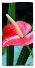 Hand Towel featuring the photograph Anthurium by Mariarosa Rockefeller