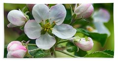 Apple Blossom And Buds Hand Towel