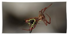 Arrow-shaped Micrathena Spider Starting A Web Bath Towel by Daniel Reed