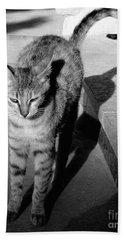 Aswan Cat Hand Towel