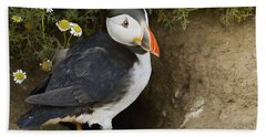 Atlantic Puffin At Burrow Skomer Island Hand Towel by Sebastian Kennerknecht