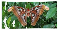 Bath Towel featuring the photograph Atlas Moth #2 by Judy Whitton