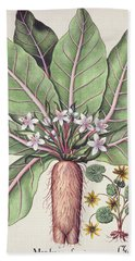 Autumn Mandrake Hand Towel