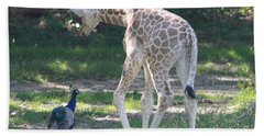 Baby Giraffe And Peacock Out For A Walk Bath Towel by John Telfer