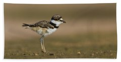 Baby Killdeer Hand Towel by Bryan Keil